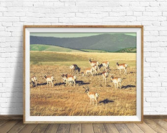 "photography, landscape, instant download art, printable art, photography, instant download, farmhouse chic, nature, art -""Antelope Prairie"""