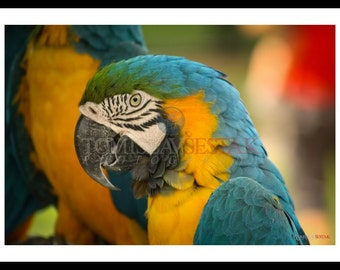 Nature photography-  parrot