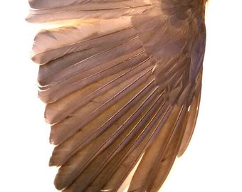 Real stuffed bird wing taxidermy mounted curiosity feathers mounted fantasy