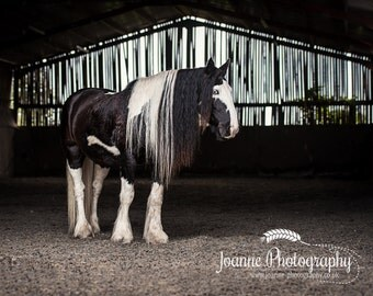 The Mane - Fine art equine photography