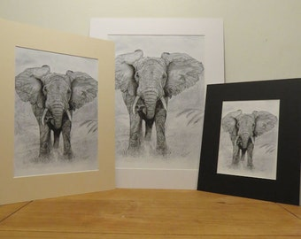 A3 Print - African Elephant Pencil Drawing