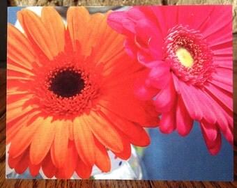 Blank Note Card - Gebera Daisies