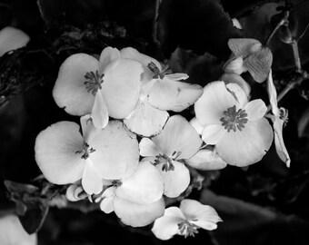 Black & White Flower 10 photograph