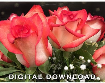 Romantic Rose Clipart Photo | Floral Digital Clipart | Stock Photography | Stock Photo Flowers | Red Ombre Roses with Babys Breath Floral 04