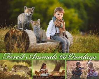 60 Forest Wild Animals Photoshop Overlays Wolf Photo Overlay Rabbit Photo Overlay Fox Photo Overlay Hedgehog Squirrel Bear Photo Overlay PNG