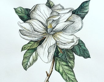 Magnolia Flower Art Print– Watercolor Painting– Pen and Ink Drawing– Stippled, Line Drawing, Illustration– Archival Art Print
