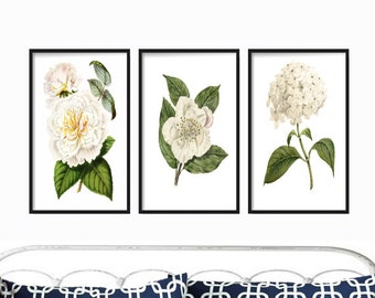Wall Art - Botanical Prints - Wall Hanging - Prints - Home Decor - Gift for her - Wall Art Print - Vintage -  Rustic Decor - Farmhouse Decor