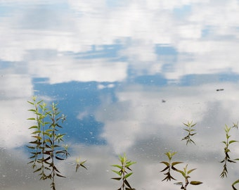 Reflection of Summer 20x30 Photograph with Wood Edge