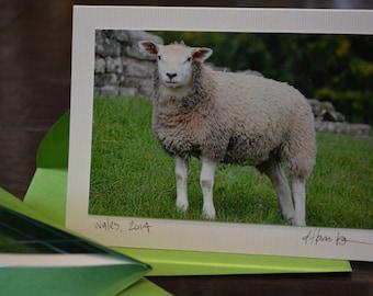 blank notecards - welsh sheep (2pk)