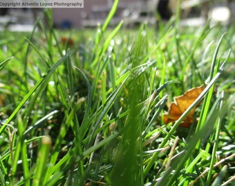Grass Photograph Digital Download