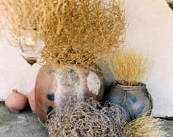 Medium Tumbleweed