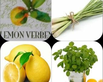 Lemon Verbena, Lemongrass and Citrus Basil 4.4 oz each