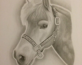 Custom Handdrawn Animal Portraits