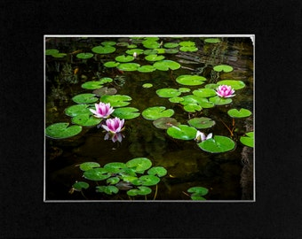Photo Lilly Pad