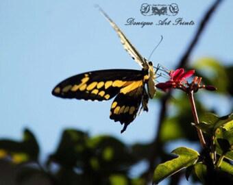 Butterfly 12-2