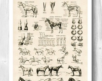 PRINTABLE Horse Art, Horse poster, Horse skeleton, Educational poster, Horse anatomy Print, Equestrian Print, cottage decor, rustic decor.