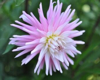 Pink flower, digital photography