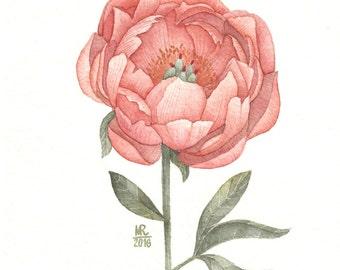Paeonia|Original flower watercolor|Botanical watercolor|Flower watercolor|Watercolor painting