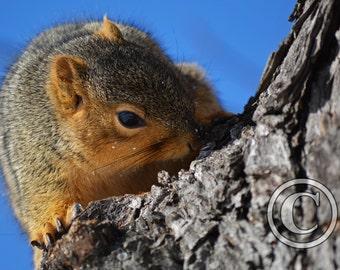 Squirrel Nature Photo Print