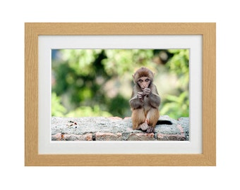 Macaque Monkey photograph print
