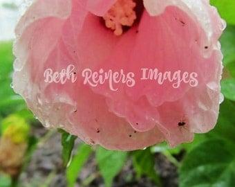 Instant Download Digital Photograph Hibiscus Love