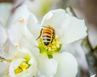 Bee and Camelia