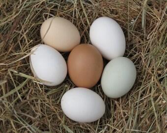 6 x Blown Chicken Eggs for craft