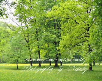 Spring Digital background backdrop | Nature photography | Landscape | Dandelion field | Summer | Forest scene