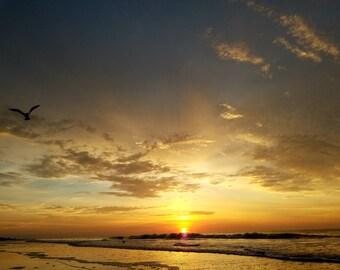 Golden Sunrise with Bird