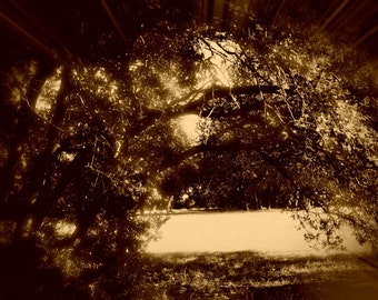 Nature Tree Landscape Photography #2 *In Sepia*