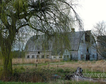 """Barn Photography, White Barn, Country Picture, Farm Artwork, Old Buildings, Farmhouse Decor, Rustic Wall Art, """"Weeping Willow White Barns"""""""