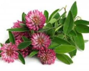 Red Clover Herb / Tea
