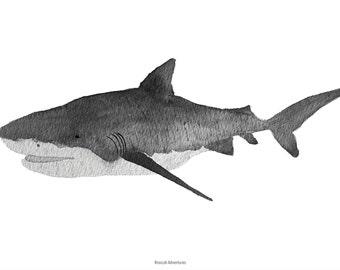 Shark, A4 print