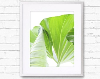 Growing, green leaves photo, Tropical Decor,Botanical Print, Tropics, Green Art, Tropical Wall Art,