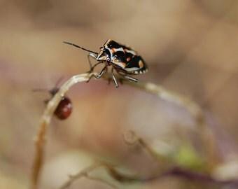 L10 - Bagrada Bug 2