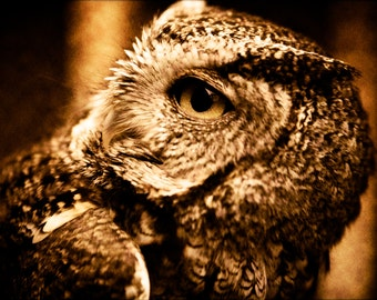 Easter Screech Owl, Fine Art Photography, Nature Photography, Sepia
