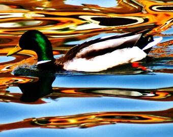 Metallic Duck