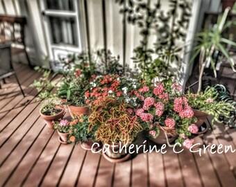 Flower Pots photo