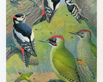 1960's Woodpecker Plate - 1960's Woodpecker Lithograph