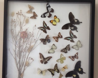Butterfly frame display