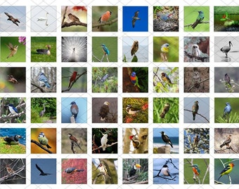 48 one inch square images - Birds