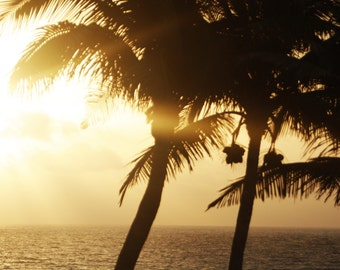 Silhouetted Palm Tree