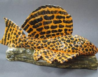 Sail-fin Pleco, (Pterygoplichthys gibbiceps)