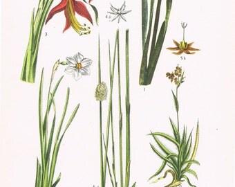 best plant and flower shops for valentines day - parisptiqueenchok page originallour