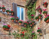 Assisi Italy Flowerpots Geraniums Perugia Umbria Tuscany Saint Francis Photo Poster Print Stone Wall Pink Red Flowers Ivy Flower Pots Spring