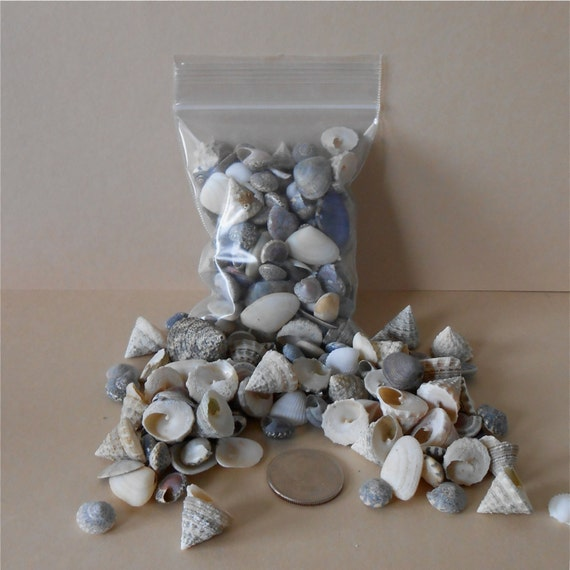 Miniature sea shells for craft or jewelry by enchantedgardens for Tiny shells for crafts