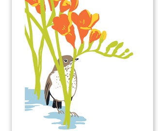 """Hermit Thrush and Freesias and  8"""" x 10"""" Art Reproduction"""