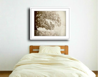 """Oak tree photograph - meadow - woodland - faded  soft browns - earthtones - neutral - rustic nature photograph  """"Origins"""""""