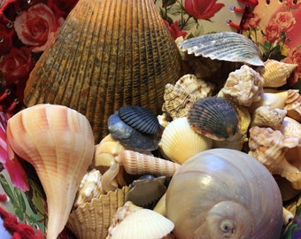 Large Selection Of Seashells -100+ - Wedding - Crafts - Beach