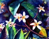 plumeria art  8x10 giclee prints frangipani hawaiian lei flowers plumerias hawaii decor kauai galleries paintings